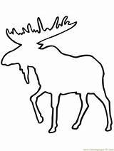 Moose Outline Coloring Printable Deer Drawing Mouse Elk Head Coloringpages101 Drawings Mammals Pdf Animals Getdrawings Paintingvalley sketch template