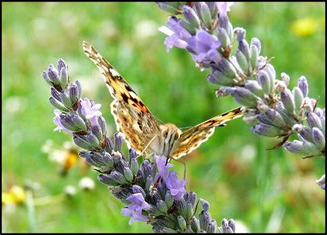 cuisine des fleurs papillon photo de fleurs des fleurs a la cuisine
