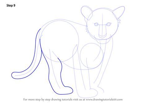 step  step   draw tiger cub drawingtutorialscom