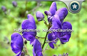 Higenamine Norcoclaurine Review