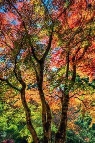 Multnomah Falls Autumn Colors Wallpaper