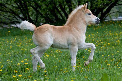 ponies  horses  wonderopolis