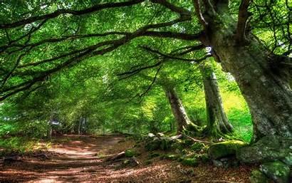 Desktop Trees Backgrounds Forest Trail Wallpapertag