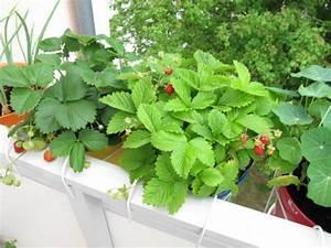 Balkonblumen Richtig Pflanzen : balkon bepflanzen die richtige bepflanzung des balkons ~ Frokenaadalensverden.com Haus und Dekorationen