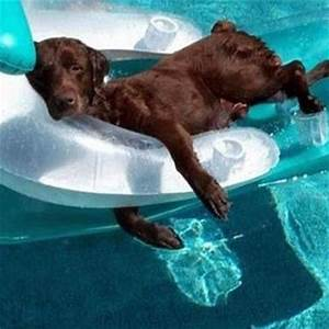 dog float pool