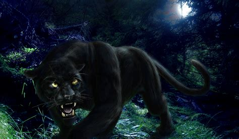 Panther Animal Wallpaper - black panther wallpaper hd
