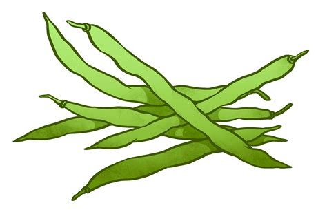 Green Beans Clipart Bean Clipart Pencil And In Color Bean Clipart