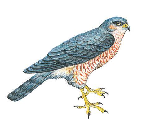 vogel bedeutung duden vogel rechtschreibung bedeutung definition herkunft