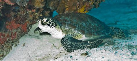 endangered endangered species act union  concerned