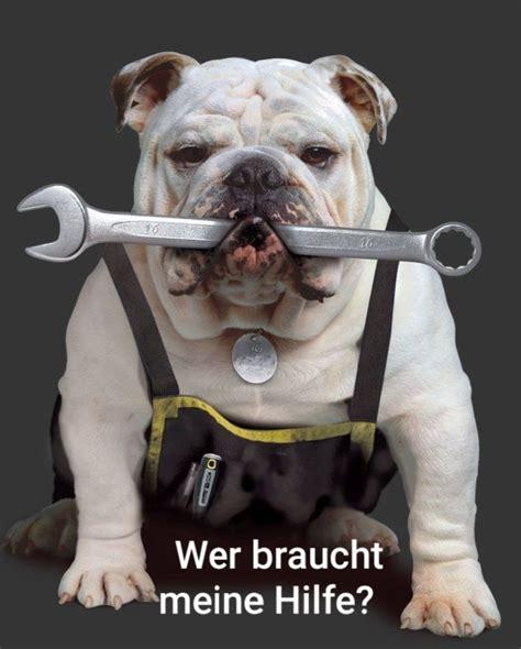 Pin by Debbie Danner on Was man so wissen muß | Bulldog ...