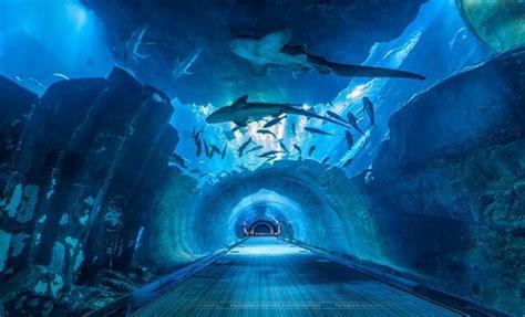 Dubai Aquarium & Underwater Zoo Pass + Dubai City Tour