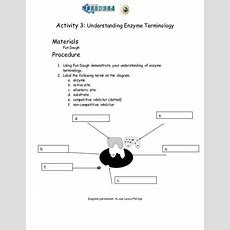 Enzymes Worksheet Homeschooldressagecom