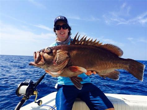 cobia florida fishing keys report grouper fish reports fishtrack march