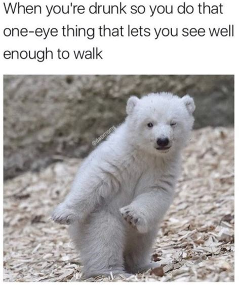 30 Funny Animal Memes Youll Be So Glad To See