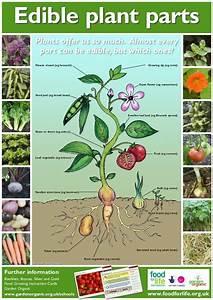 Edible Medicinal Flower Plant Chart