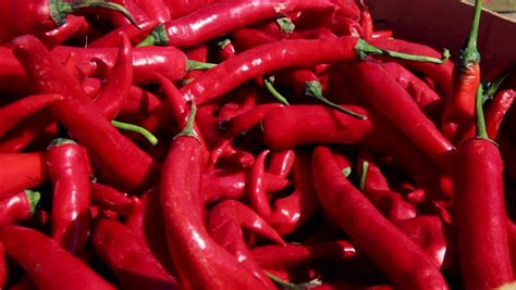 cayenne stock video footage   hd video clips