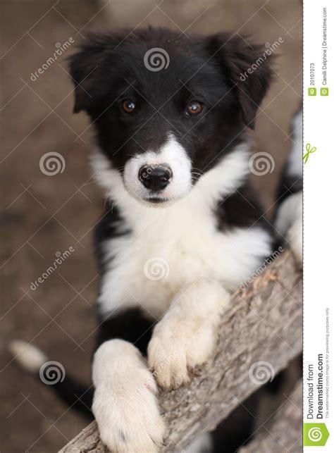 cute black  white puppy dog stock  image