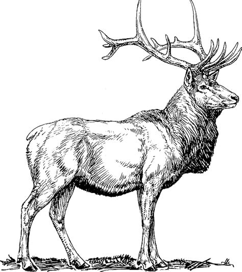 pictures antlers  images