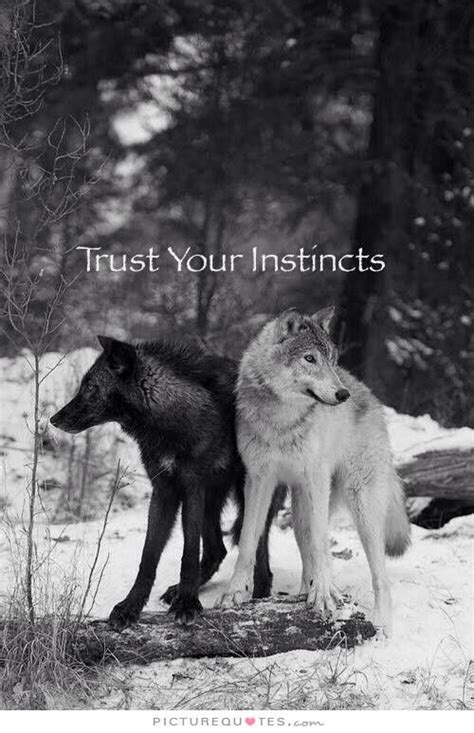 Black Wolf Quotes Wallpaper by Best 25 Wolf Quotes Ideas Only On Warrior