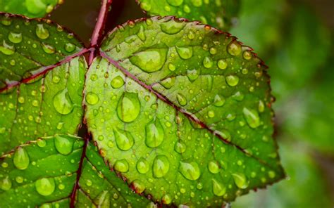 water droplets  green leaf  ultra hd wallpapers