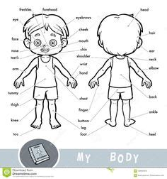 human body parts poster  kids anatomy lesson