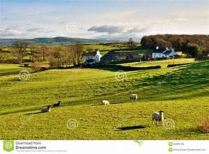 English Countryside Landscape Sheep Grass Stock Photos ...