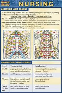 Quickstudy Guide - Pocket Nursing