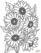 Coloring Sunflower sketch template