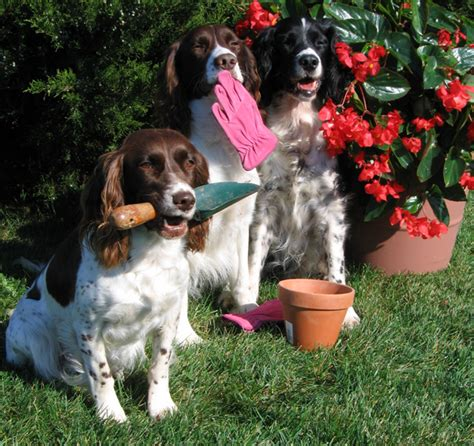 tips keep your dogs safe while gardening