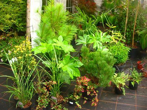 japanese plants sculptural plants