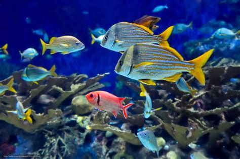fonds d ecran qui bouge fond d 233 cran poisson anim 233 fonds d 233 cran hd
