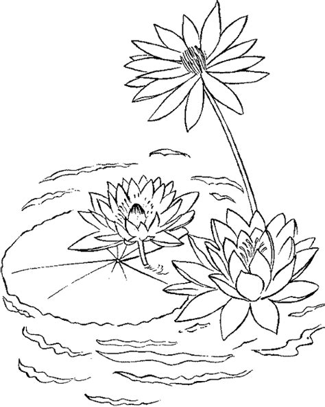 lily pad printable coloring pages enjoy coloring kids