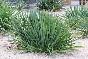 Yucca Palme Winterhart : yucca palme im winter so gelingt das berwintern ist ~ A.2002-acura-tl-radio.info Haus und Dekorationen