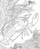 Coloring Pages Printable Adult Crayfish Crawdad Ocean Beach Colorpagesformom Crawfish Colouring Print Seascape Sea Drawing Crustacean Animals Nature Sheets Supercoloring sketch template