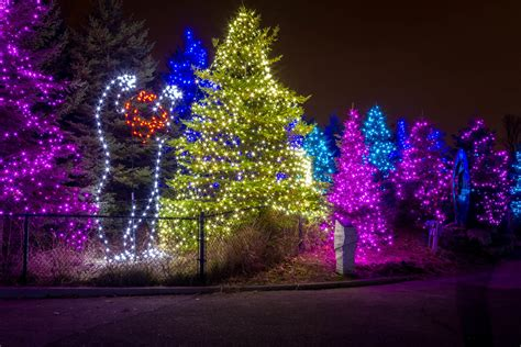 lights at the detroit zoo hamish carpenter photography
