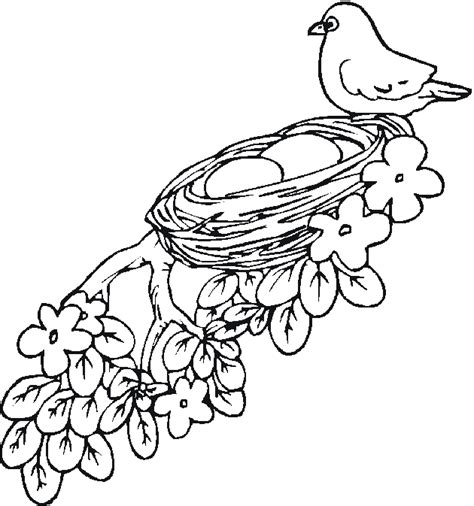 Hd Wallpapers Bird Nest Coloring Pages For Kids Edpikikinfo - coloring pages birds nest