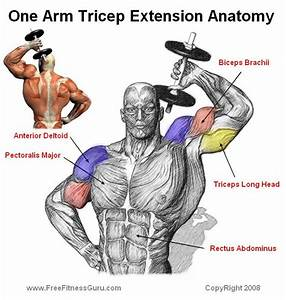 Triceps Extension Workout  Musclespro Com