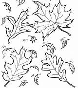 Coloring Lettuce Leaf sketch template