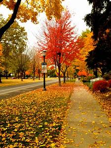 red | seasonsofathousandwords  Fall