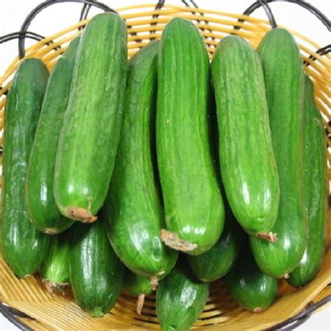 Cucumber Seeds by 100pcs Big Cucumber Seeds Delicious Cucumber Fruit