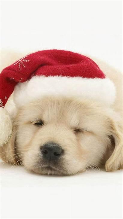 Christmas Puppy Dog Hat Iphone Golden Desktop