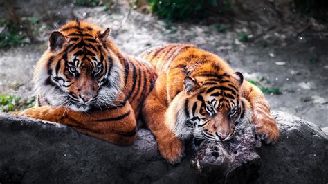 beautiful animals wallpapers  desktop wallpaperwiki