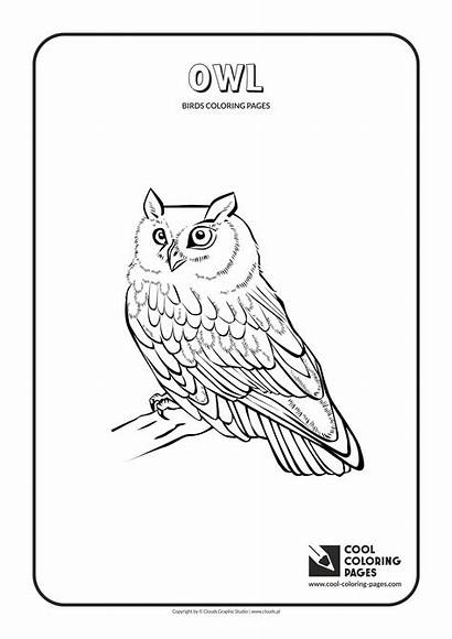 Coloring Cool Pages Owl Birds Animals Owls