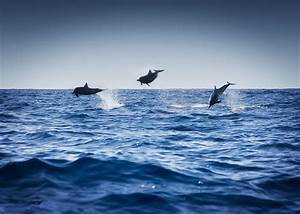 Dolphins Playing In The Ocean Photograph by Darren Greenwood