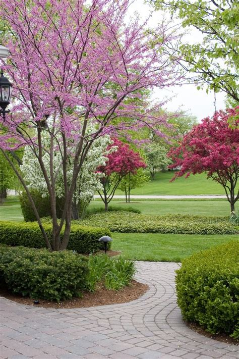ornamental garden trees who says bigger is always better that s not the case with dwarf ornamental trees which make a