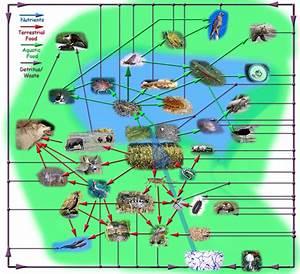 Food Chains & Webs   Montessori EII Ecology   Pinterest ...