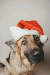Christmas German Shepherd Dog