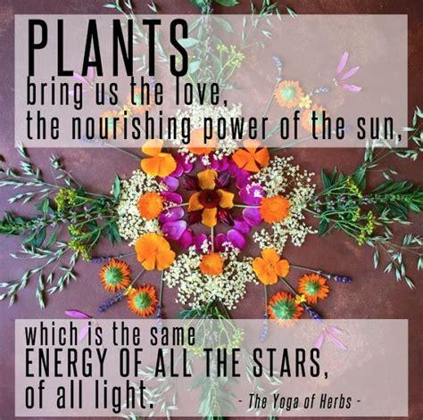 sunkissed truth plant medicine medicinal plants