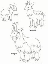 Gruff Goats Billy Coloring Printable Colour Three Activities Goat Masks Troll Clipart Deviantart Activity Pdf Clip Lovely Library Role Coloringhome sketch template