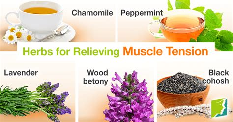 Top 6 Herbs for Relieving Muscle Tension | Menopause Now